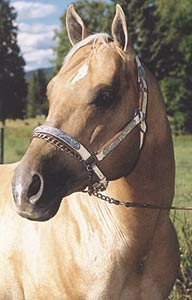Palomino Quarterhorse Stallion - Ima Three Bar Jet